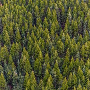 Asset Allocation - Random Forest